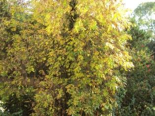 e9a63-autumntree