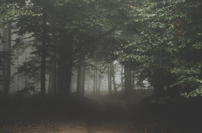 Arthur Rutkowski - forest - trees - mist