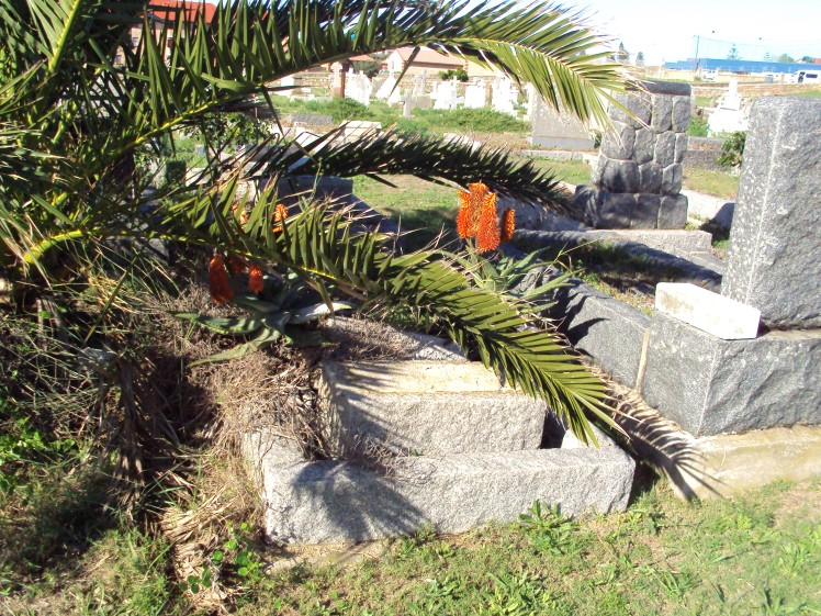 grave, aloes, grave with flowers