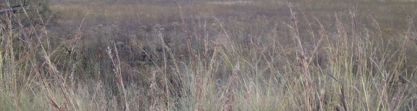 Grass, grassland, Highveld