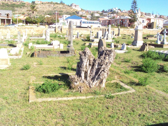 tree in grave, tree growing from grave, cemetery