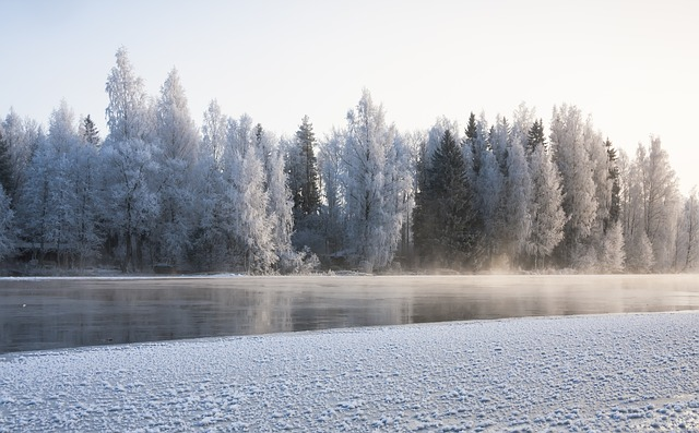 Finland, snow, trees, winter