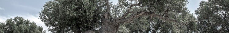 Tree header faded Milada Vigerova