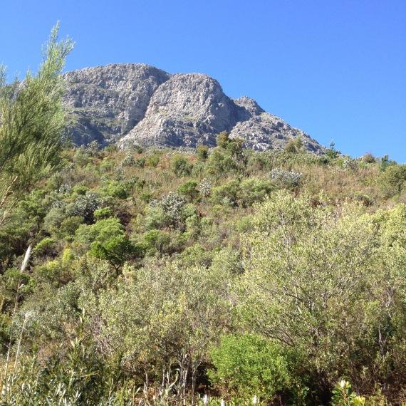 Mont Fleur 4