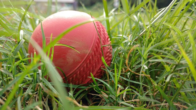Red cricket ball in green grass