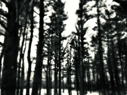 tall-trees-in-forest_t20_ZLNYbk