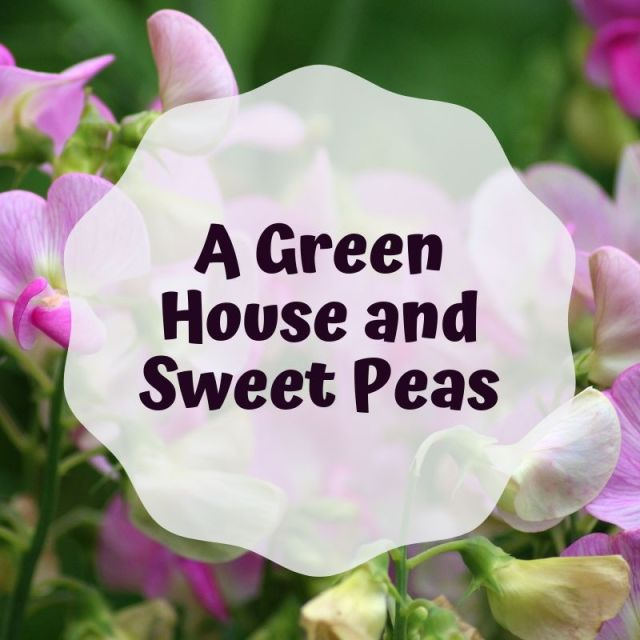 Blog header image July 2019 A Green House and Sweet Peas